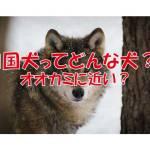 四国犬 ニホンオオカミ 日本犬