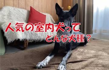 人気 室内犬