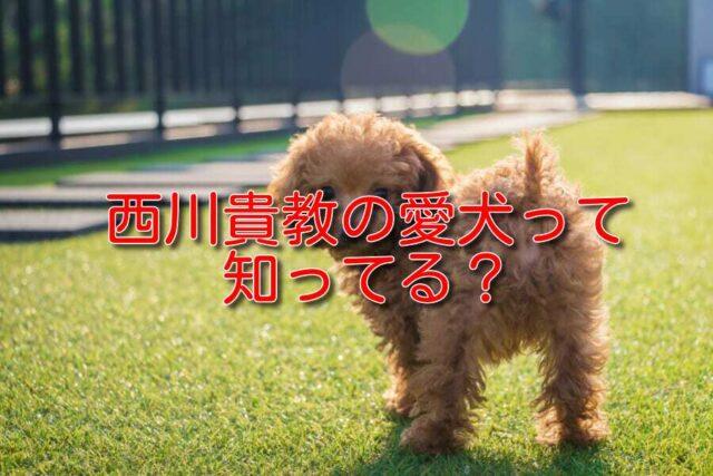 西川 貴教 犬