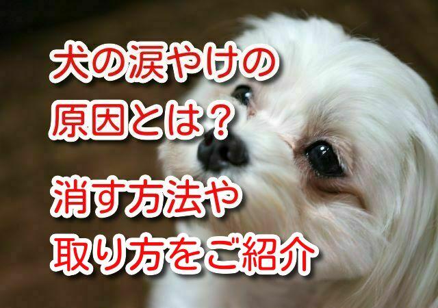 犬 涙やけ 原因