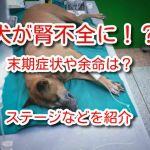 犬 腎不全 症状