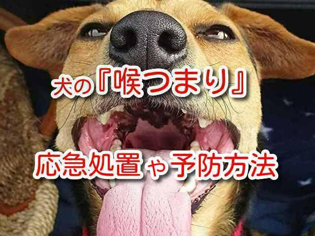 犬 喉つまり