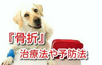犬 骨折 完治 期間