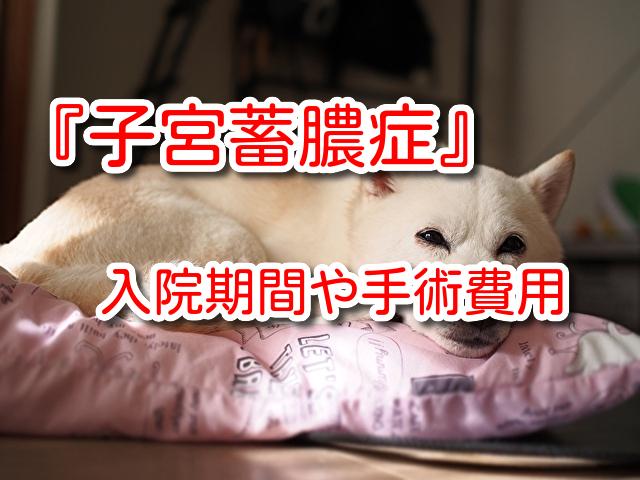 犬 子宮蓄膿症 手術