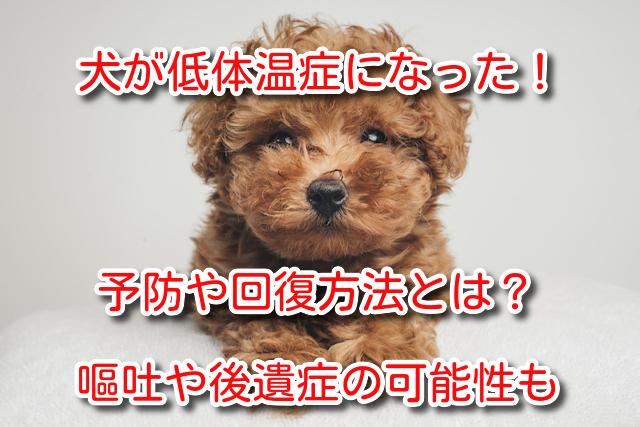 犬 低体温症