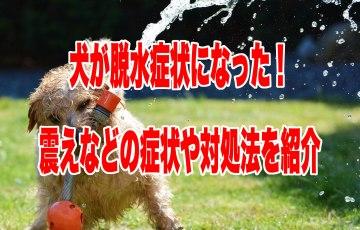 犬 脱水症状