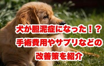 犬 胆泥症