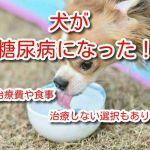 犬 糖尿病