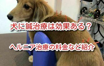 犬 鍼治療