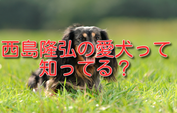 西島隆弘 犬
