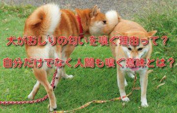 犬がおしりの匂いを嗅ぐ理由って?自分だけでなく人間も嗅ぐ意味とは?