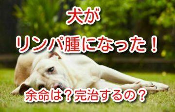 犬 リンパ腫 完治