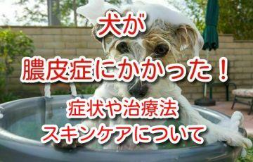 膿皮症 犬