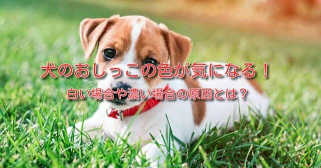 犬 おしっこ 色 犬 おしっこ 透明