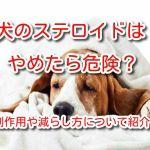 犬 ステロイド
