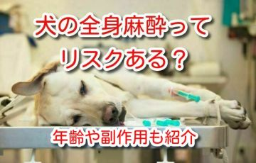 犬 全身麻酔