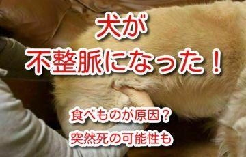 犬 不整脈