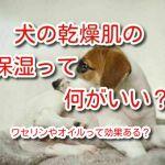 犬 乾燥肌 保湿