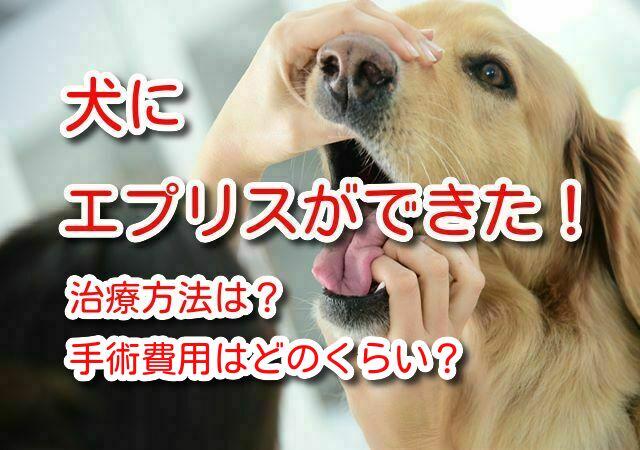 犬 エプリス