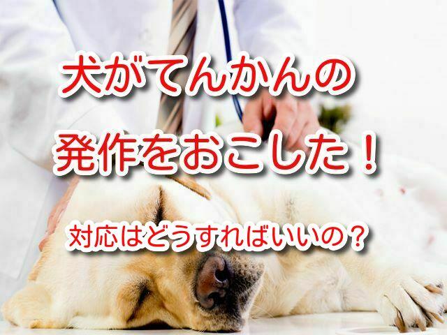 犬 てんかん 発作 対応