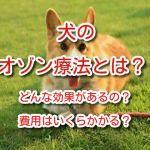 オゾン療法 犬