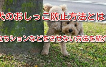 犬のおしっこ防止方法とは?立ちションなどをさせない方法を紹介。