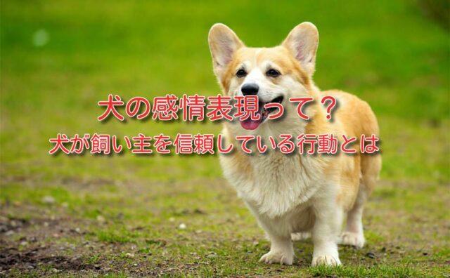 犬 感情 表現