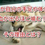 犬 自分の足 噛む