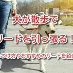 犬 散歩 リード