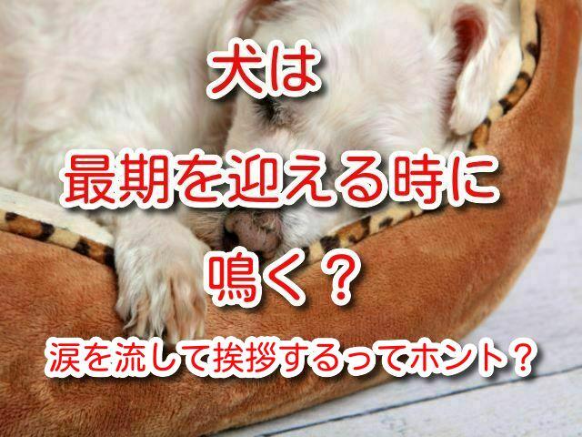 犬 最期 鳴く
