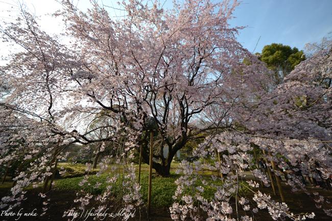 20110402_rikugien05.jpg