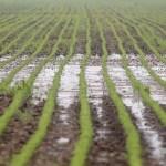 casteel-soyflood