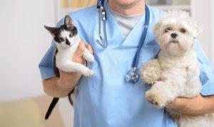 loving-touch-animal-hospital