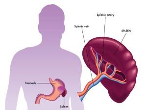 Laparoscopic Splenectomy | Orange County Surgeons