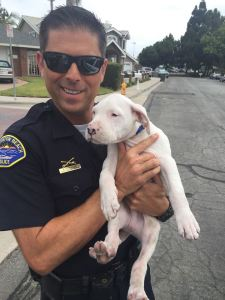 HUNTINGTON BEACH POLICE officer holds the dog that officers rescued from a backyard pool (HBPD photo).