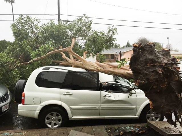 UPROOTED TREE fallen on a parking vehicle in Garden Grove (GGFD photo).