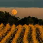 It May Look Full Today, But The Harvest Moon Rises Tomorrow