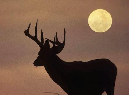 July full moon – Orange Live