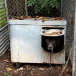 The Lowest of The Low: 7 Dogs Seized In Orange