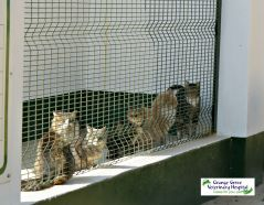 Older cats waiting to be adopted at Animal Anti Cruelty League Johannesburg