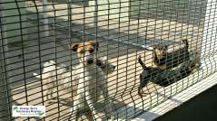 Dogs looking for homes at Animal Anti Cruelty League Johannesburg