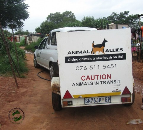 Animal Allies visiting informal settlement to collect unsterilised dogs for Spay Day campaign.