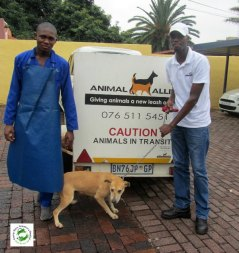 One of the dogs sterilised at Orange Grove Vet as part of the Spay Day campaign.