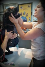 Dr Hayley (visiting vet from Israel) examining Ozzy's canines!