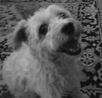 joffa in black and white