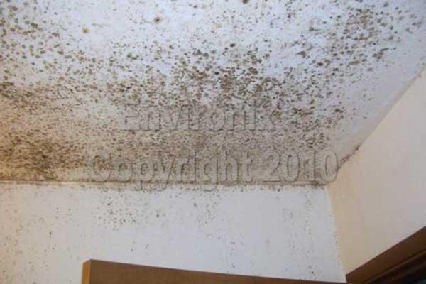 Remove Black Mold On Bathroom Ceiling   Orange Mold