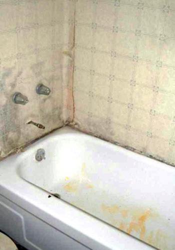 orange mold in shower and bathroom   orange mold