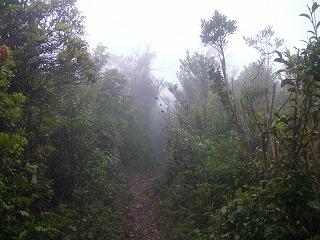 稲尾岳登山道5