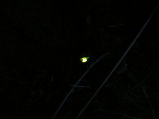 Lightning bugs!