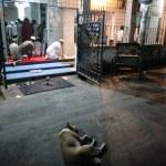 Ada fatwa yang minta masjid sediakan tempat khas untuk anjing? Ini logik disebaliknya